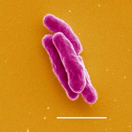 индийские таблетки от паразитов отзывы
